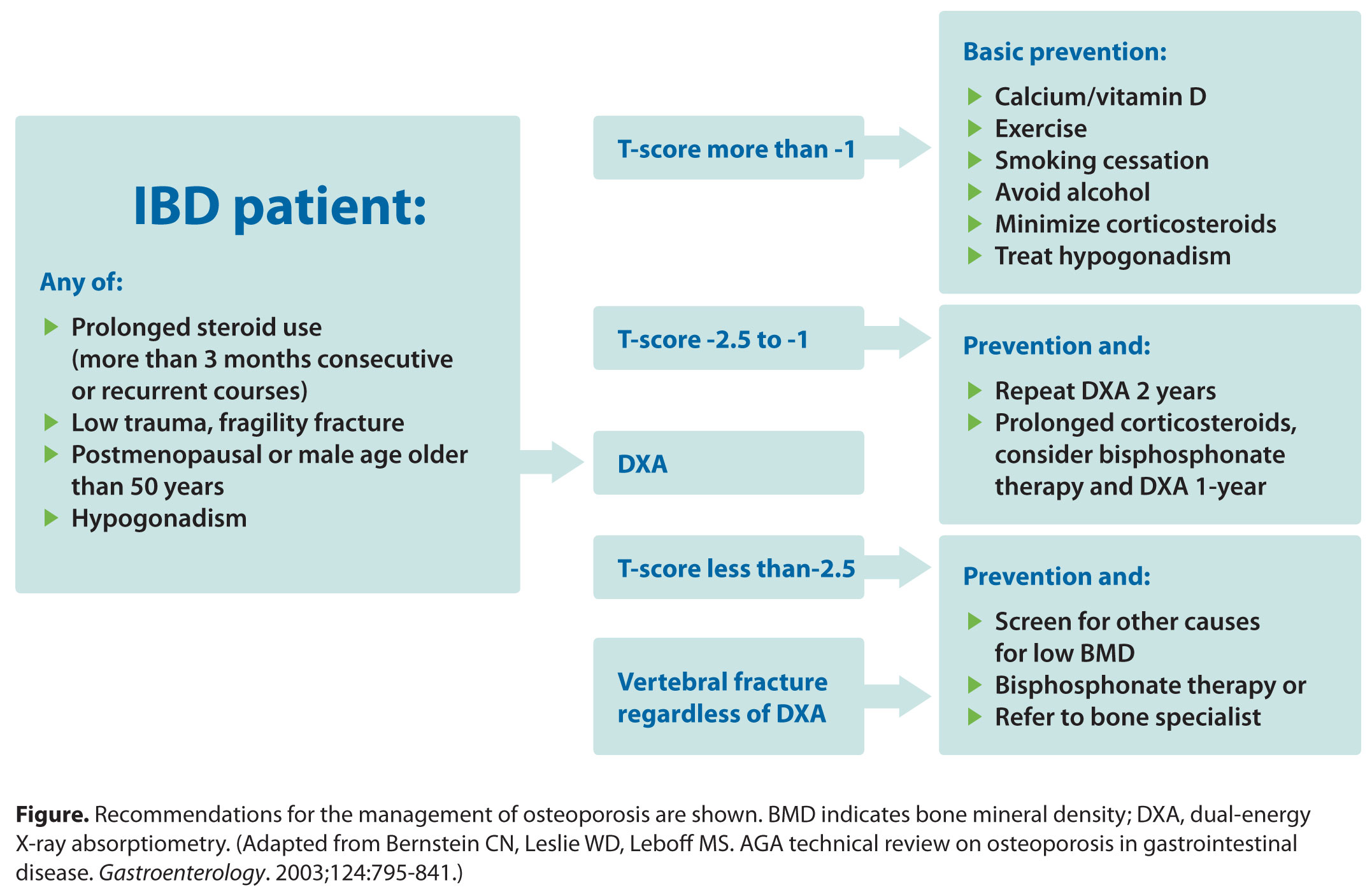 osteoporosis and inflammatory bowel disease, Skeleton